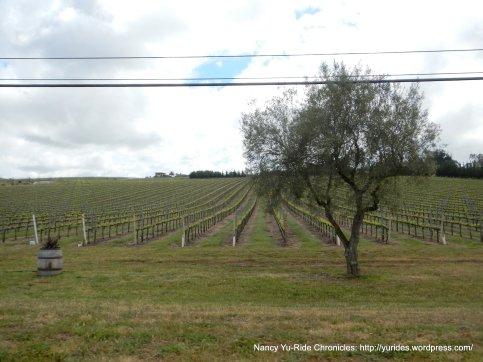 vineyards on E Clark