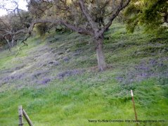light lavender wildflowers