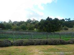 vineyards along Foxen Canyon