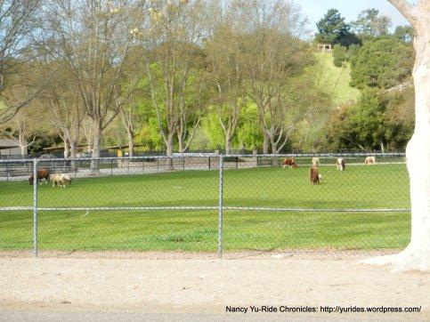 miniature horse farm