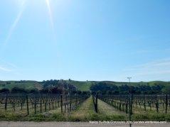 acresof vineyards