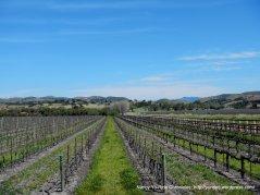 more vineyards