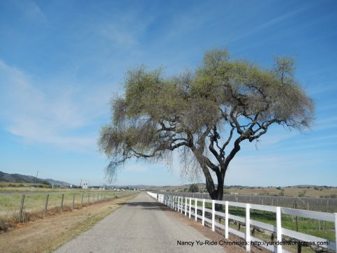 on Carrari-frontage road