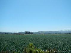 crops along Purisima Rd