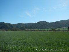 open green meadows