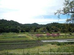 Chamberlin Ranch