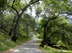 narrow road thru Birbent Canyon