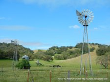 windmills at Foxen Winery
