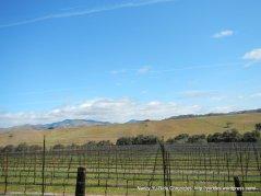 miles of vineyards