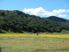 field of yellow wildflowers