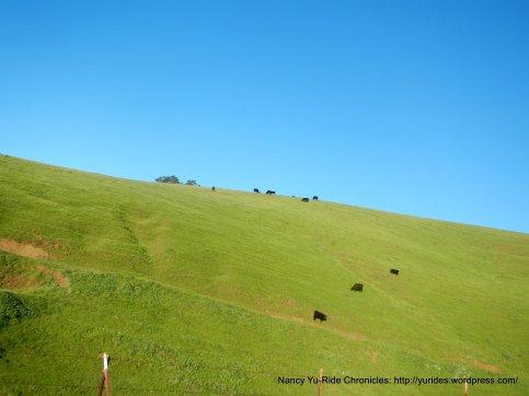 rolling hills aglow