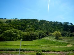 meadows and hills-lower flatlands