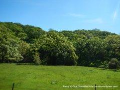 more greenery