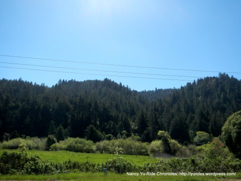 forest along the Russian River
