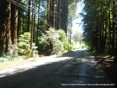 tthrough the redwoods