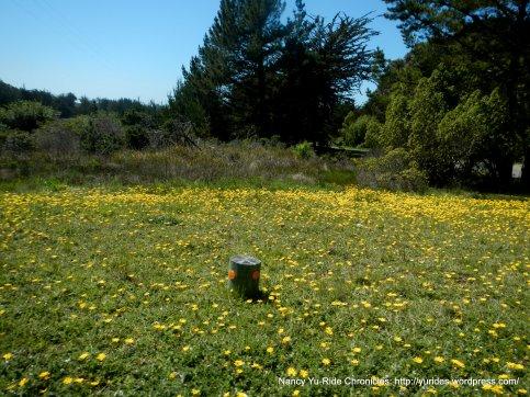 pretty wildflowers
