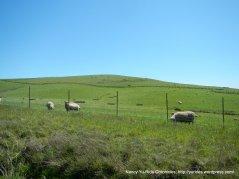 sheep ranch-top of last climb