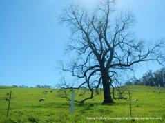 lovely artful tree