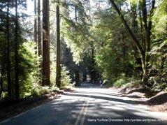 redwoods on Pinehurst Rd
