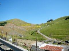 grazing cattle/horse ranch