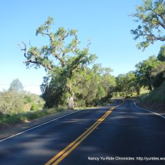 rolling through the old oaks