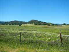 wildflowers-Pope Valley
