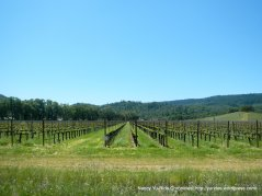 Hardester vineyards
