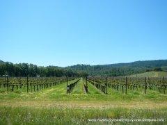 Hardester vineyards