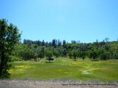 green grasslands