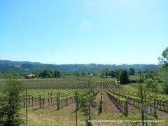 vineyards around Calistoga