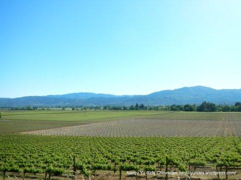 gorgeous Napa Valley