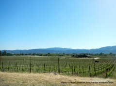 with views of Sonoma Mtn