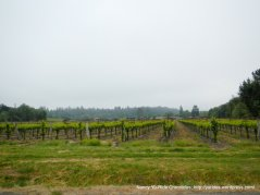 vineyards on Sullivan Rd