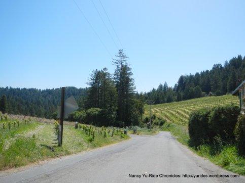 Porter Bass vineyards