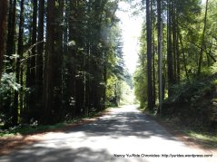 through the redwoods