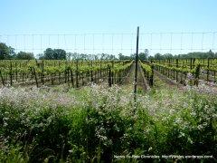 vineyard wildflowers