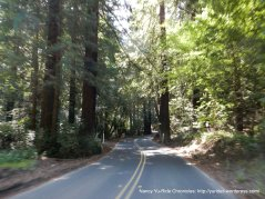 the redwoods on Pinehurst Rd