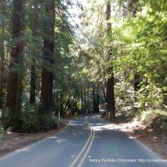 the redwoods on Pinehurst Rd