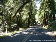 gentle railroad grade-lower Pinehurst
