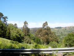 view of Tilden Park