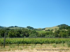 vineyards on Novato Blvd