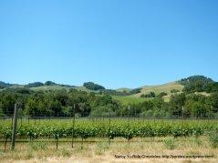 vineyards on Novato Blvd