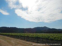 Oakville vineyards