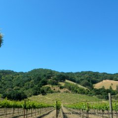 Franklin Canyon vineyards