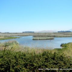 Goodyear Slough