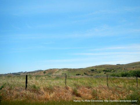 soft grasslands