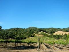 Franklin vineyards