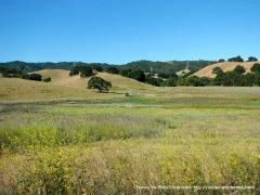 Briones meadows