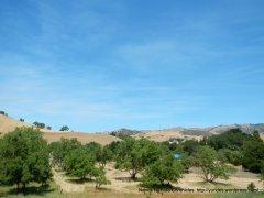 Tassajara orchards