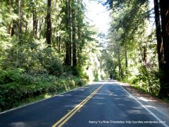 new pavement through the redwoods